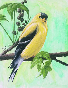 Joseph Ogle - Goldfinch