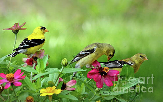 Goldfinch Party by Nava Thompson