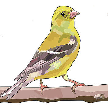 Goldfinch Watching by Jamie Downs