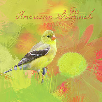 Goldfinch Watercolor Photo by Heidi Hermes