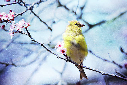 Goldfinch with Texture by Trina Ansel