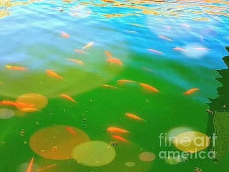 Goldfishes by Daniel Janda