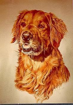 Goldie by Judith Angell Meyer