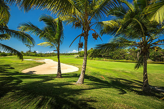 Golf course. Beautiful landscape of a golf court with palm trees by Valentin Valkov