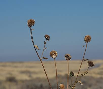 Gone To Seed by Eric Tressler