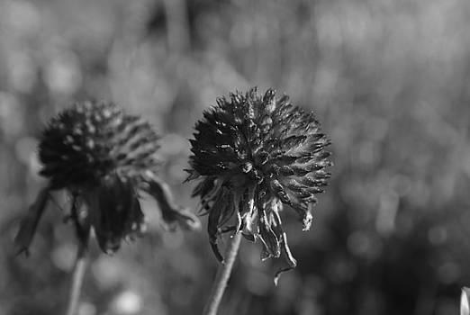Michelle  BarlondSmith - Gone to Seed