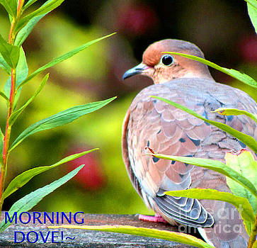 Good Morning Dove by Gardening Perfection