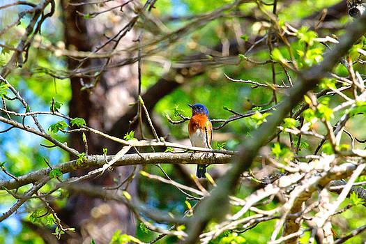 Good Morning Mr Bluebird by Linda Unger
