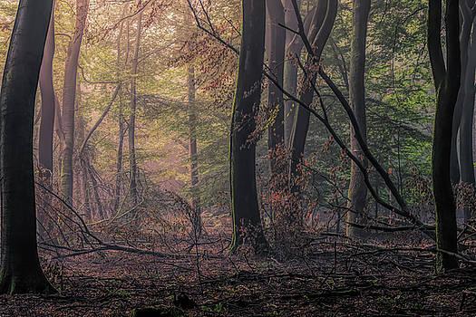 Good morning Speulderbos by Tim Abeln
