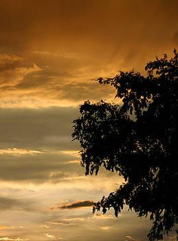 Good Night by Chrissy Skeltis