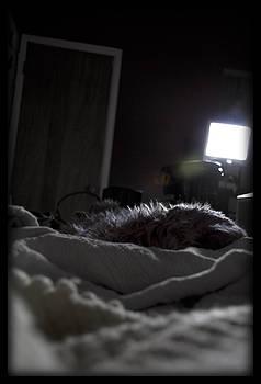 TNT Images - Good Night Dvorak - 500070