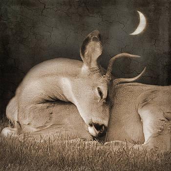 Goodnight Deer by Sally Banfill