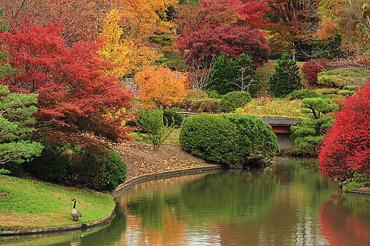 Goose and Fall Foliage Along Japanese Garden Lake by Greg Matchick