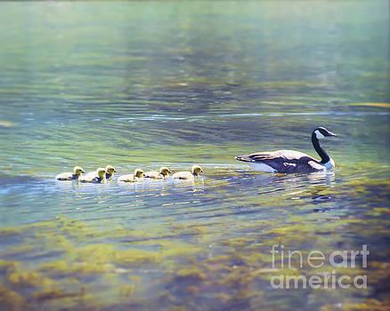 Goose and Goslings by Kerri Farley