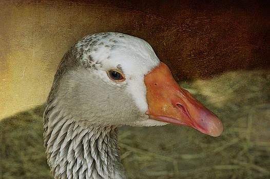 Nikolyn McDonald - Goose - Domestic Greylag