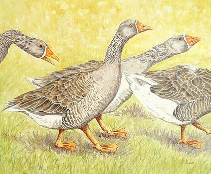 Goose Guards by Frances Evans