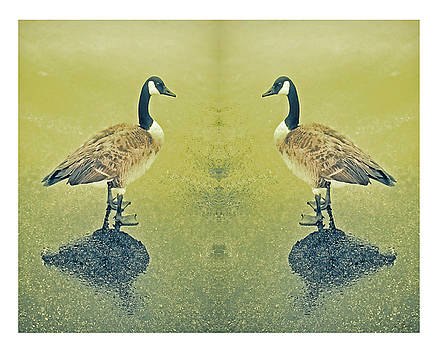 Goose In The Mirror by Tony Grider