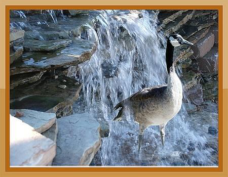 Colette Merrill - Goose in Waterfall