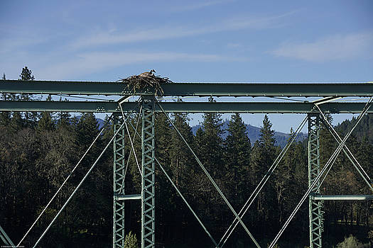 Mick Anderson - Goose On An Osprey Nest