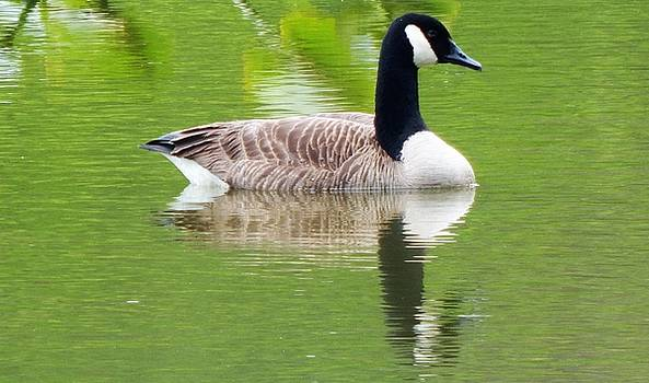 Goose on the Lake by Hattie Schenck