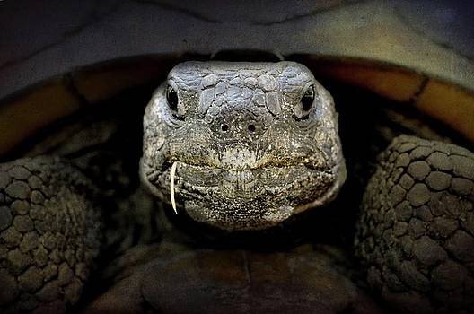 Gopher Turtle  by Eagle Finegan
