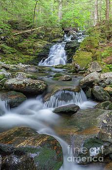 Gordon Falls - Randolph New Hampshire  by Erin Paul Donovan