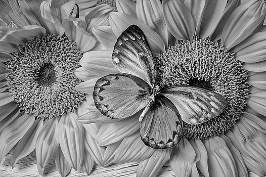 Gorgeous Butterfly On Sunflowers Black And White by Garry Gay