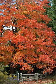 Gorgeous Fall Foilage by Maria Keady