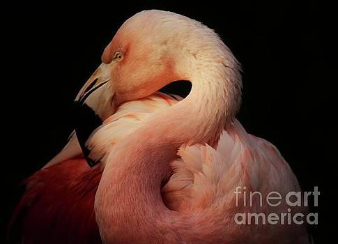 Paulette Thomas - Gorgeous Flamingo