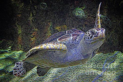 Paulette Thomas - Gorgeous Sea Turtle