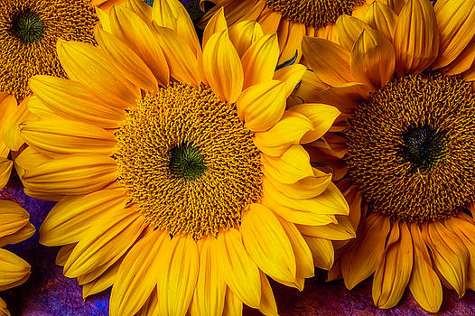 Gorgeous Sunflowers by Garry Gay