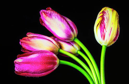 Gorgeous Tulip Bunch by Garry Gay