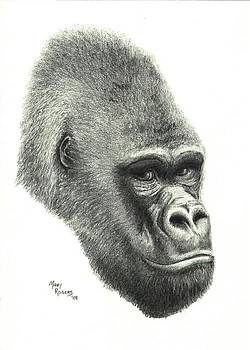 Gorilla by Mary Rogers