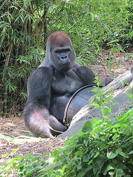 Douglas Martin - Gorilla Says