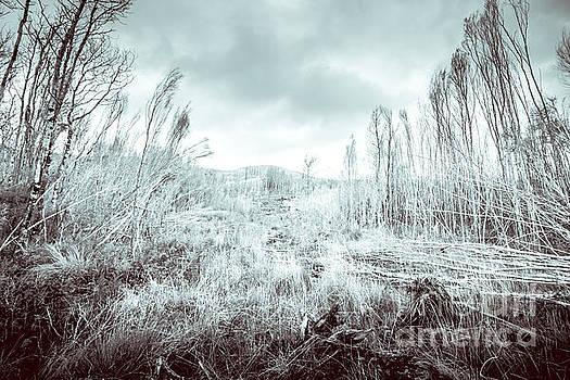 Gormanston snowscape by Jorgo Photography - Wall Art Gallery