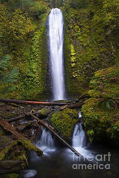 Mike Dawson - Gorton Falls