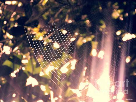 Gossamer Glow by Megan Dirsa-DuBois