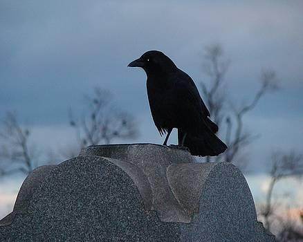Gothicrow Images - Gothic Blue Sky And Crow