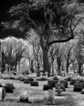 Gothicrow Images - Gothic Trees Among The Tombstones