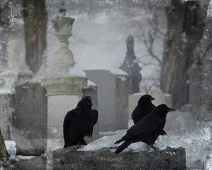 Gothicrow Images - Urban Cemetery Gothic Winter Crows
