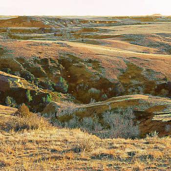Graceful April Grasslands by Cris Fulton