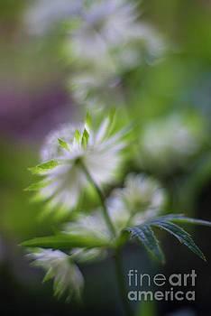 Mike Reid - Graceful Flora Bokeh
