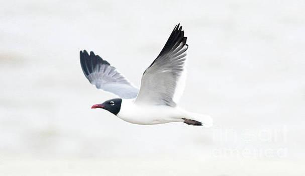 Graceful Gull by Debbie Parker
