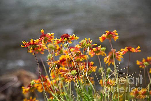 Omaste Witkowski - Graceful Wishes Methow Valley Flowers by Omashte