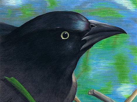 Grackle by Brandon Sharp