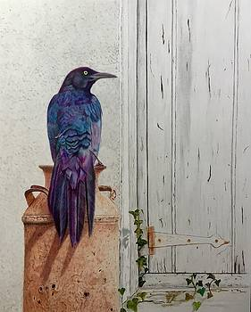 Grackle Greetings by Michelle McAdams
