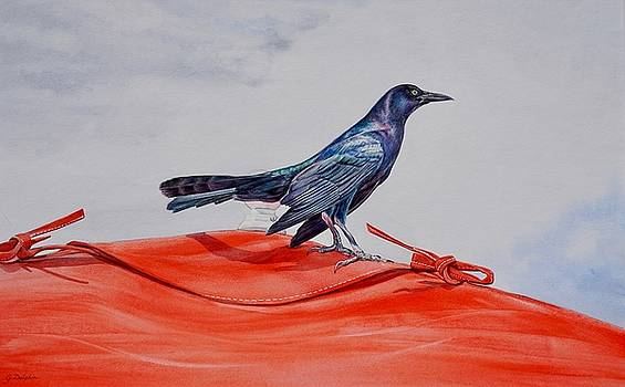 Grackle on a Red Tent by Gail Dolphin