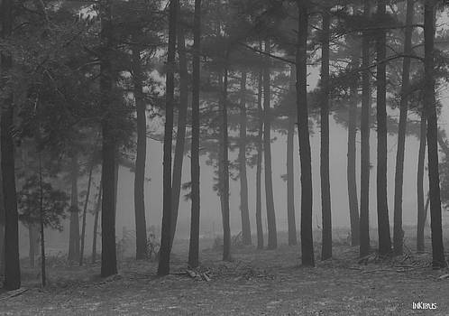 Alana  Schmitt - Gradient Pines