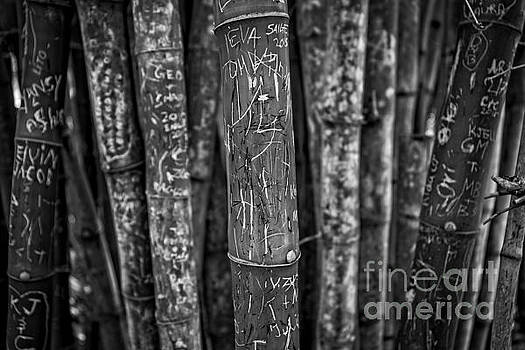 Edward Fielding - Graffiti laden bamboo black and white