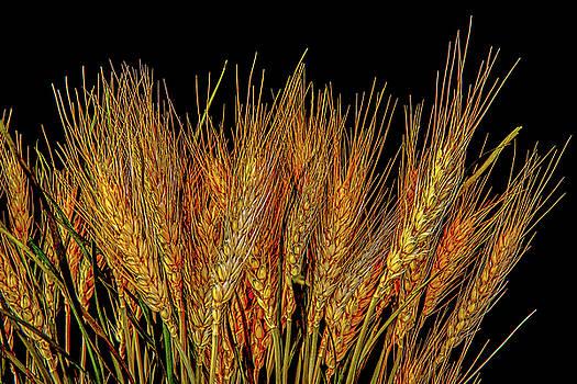 Grain by Bob Orsillo
